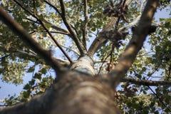 Widok drzewo przy zmierzchu światłem zdjęcie royalty free