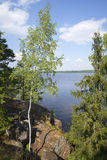 Widok falezy zatoka przy Monrepos, Vyborg Fotografia Royalty Free