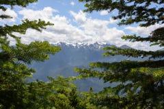 Widok górski przez gałąź sosna, Olimpijski park narodowy, Waszyngtoński usa zdjęcia royalty free