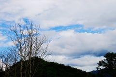 Widok góry, niebo, leje się wśród zielonych lasów Obraz Royalty Free