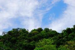 Widok góry, niebo, leje się wśród zielonych lasów Obrazy Stock
