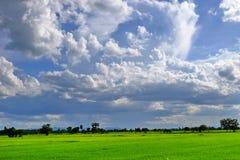Widok góry, niebo, leje się wśród zielonych lasów Zdjęcia Stock