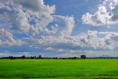 Widok góry, niebo, leje się wśród zielonych lasów Zdjęcie Stock