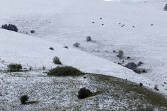 Widok góry pola łąki zakrywać śniegiem, z małą rośliną obrazy royalty free