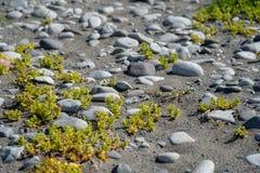 Widok gładkie skały i liszaj w Katmai parku narodowym zdjęcia royalty free