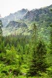 Widok halny szczyt od lasu Obrazy Stock