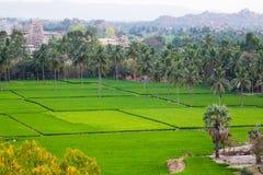 Widok Hampi z ryżowymi polami, India Fotografia Stock