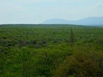 Widok jastrząbek równiny od sierra De Coro zdjęcie royalty free