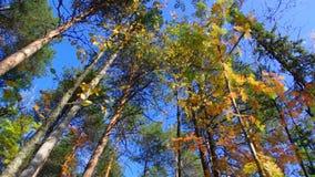 Widok jesień europejczyka las zdjęcie wideo