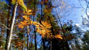 Widok jesień europejczyka las zbiory wideo