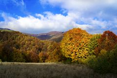 Widok jesień las Obraz Royalty Free