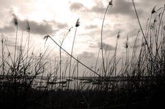widok jeziora fotografia stock