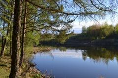 Widok jezioro od sosnowego lasowego wczesnego poranku Rosja Zdjęcia Royalty Free