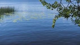 Widok jezioro przez ulistnienia drzewa Zdjęcia Royalty Free