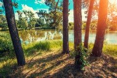 Widok jezioro w lesie Obraz Royalty Free