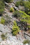 Widok kamień ablegrował halnego skłon i drzewa r na nim fotografia stock