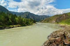 Widok Katun rzeka Altai republika, Rosja Obraz Royalty Free