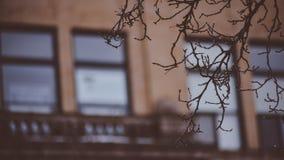 Widok klasyka, rocznika Coeur d W centrum ` Alene Idaho W Wczesnej wiośnie Z Starymi budynkami W I drzewie Branc I fotografia stock