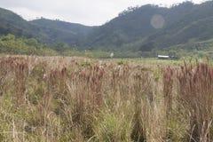 Widok krajobraz Chichonal ścieżka, Chiapas, Meksyk obrazy royalty free