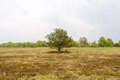 Widok krajobraz wrzos cumuje Obrazy Royalty Free