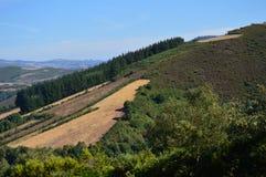 Widok krajobrazy łąki góry Galicia Podróż Kwitnie naturę obrazy stock