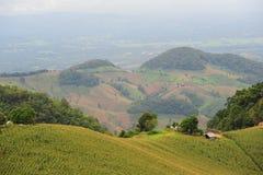 Widok kukurydzany pole na górze Fotografia Royalty Free