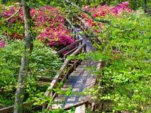 Widok Kwitnące azalie i Boardwalk fotografia stock