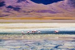Widok Laguna Verde i Różowy Flamings Obraz Royalty Free