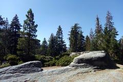 Widok las w Yosemite parku na słonecznym dniu obrazy stock