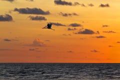 Widok latający żuraw Obrazy Royalty Free