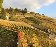 Widok Lavaux tarasy, Szwajcaria obrazy royalty free