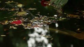Widok liście na Azjatyckim stawie z kępą mali liście zbiory