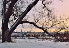 Widok małomiasteczkowy miasto przez wielkiego drzewa Obraz Stock