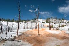 Widok Mamutowe Gorące wiosny przy anioła tarasem który tworzył krystalizujący wapnia węglan, Zdjęcie Stock