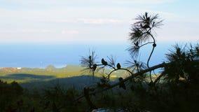Widok morze śródziemnomorskie i południowy wybrzeże Turcja przez gałąź sosna, dnia czas zbiory