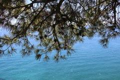 Widok morze śródziemnomorskie przez gałąź sosna i rożki zdjęcie royalty free