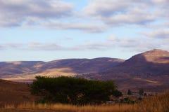 Widok na Afrykańskiej sawannie z akacją na przedpolu Obrazy Royalty Free