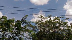 Widok na drzewie i chmurach na niebieskim niebie Zdjęcia Royalty Free