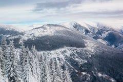 Widok na halnym Krkonose i świerczyny w śniegu Zdjęcie Royalty Free