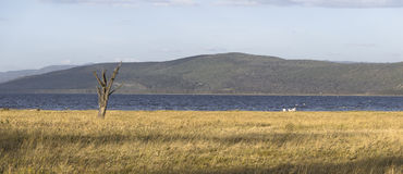 Widok na jeziornym Nakuru Obrazy Stock