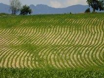 Widok na kukurydzanym polu obraz stock