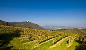 Widok na Leopoldsberg kościół i Danube od Wiedeńskiego wino jarda Obrazy Royalty Free