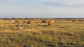 widok na obszarach wiejskich Obrazy Royalty Free