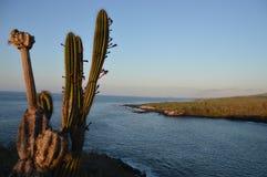 Widok na ocean od Frigatebird wzgórza przy San Cristobal wyspą, Galapagos - Obrazy Royalty Free