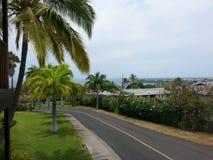 Widok Na Ocean synklina drzewa Zdjęcie Royalty Free