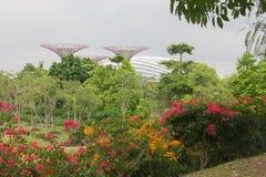 Widok na ogródach Marina Zdjęcia Stock