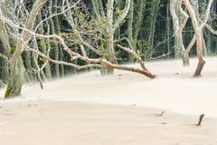 Widok na ruch diunach - Leba. Fotografia Royalty Free