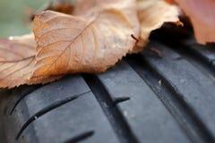 widok na stąpaniu wysokiego występu samochodowa opona z jesień liśćmi na profilu - samochodowy nastrajania i utrzymania pojęcie obrazy stock