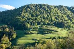 Widok na zielonym wzgórzu z lasem i polem Fotografia Royalty Free