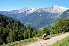 Widok nad Ahrntal, alt Adige, Włochy Obrazy Stock